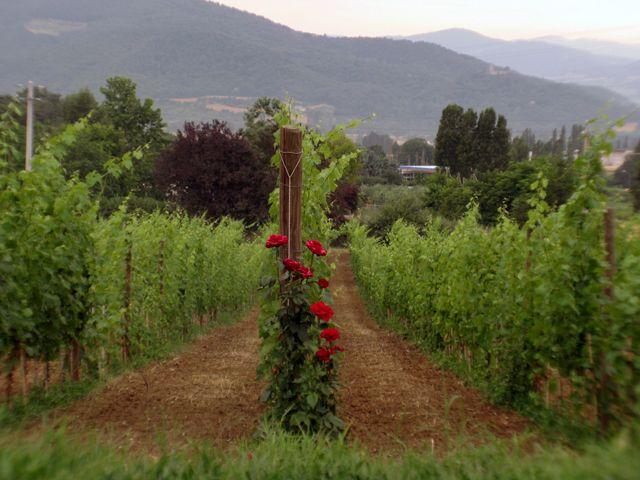Ferienwohnung La Taverna (370073), Umbertide, Perugia, Umbrien, Italien, Bild 10