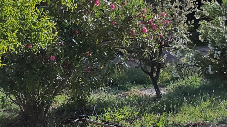 Holiday apartment El Almendro (430363), Lanjaron, Granada, Andalusia, Spain, picture 32