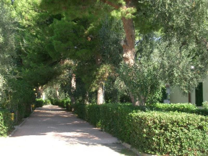 Ferienwohnung Trilo 5 (491874), Vieste, Adriaküste (Apulien), Apulien, Italien, Bild 18