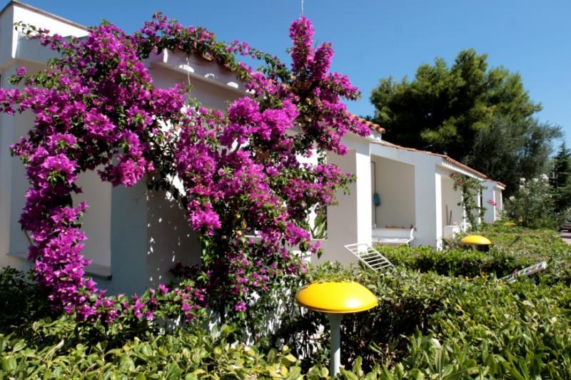 Ferienwohnung Trilo 5 (491874), Vieste, Adriaküste (Apulien), Apulien, Italien, Bild 13