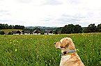Vakantiepark Happy Hill Cerny Dul Thumbnail 45