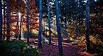 Villa Birdie 4p Oosterhout Thumbnail 25