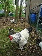 Vakantiepark Type B Standaard 6 persoons stacaravan Schoonloo Thumbnail 69