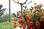 Apartment Bilocale Agriturismo Pistoia Thumbnail 23
