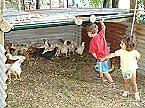 Ferienpark IL Custode Umbertide Miniaturansicht 21