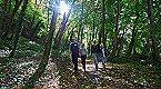 Vakantiepark Etoile 2p Blaimont Thumbnail 40
