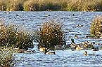Vakantiepark Finse Bungalow 6P Meppen Thumbnail 36