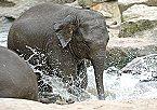 Vakantiepark Finse Bungalow 4P, Comfort Meppen Thumbnail 36