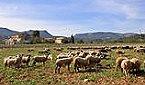 Maison de vacances Casa Rural Torrelles de Foix Miniature 20