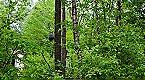 Parque de vacaciones Type 4 Plus nr. 141 Sauna Uelsen Miniatura 31