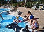 Ferienpark Trilocale Vieste Miniaturansicht 9