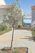 Holiday park Nuciola 4p 6/8p Cervione Thumbnail 24