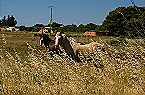 Parc de vacances Le Domaine du Golf H 3p 6p Fabregues Miniature 39